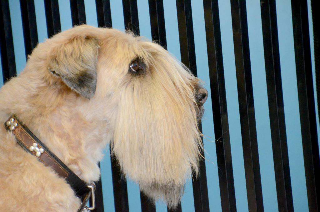 Planet Poodle Best Dog Salon in RedLake NJ