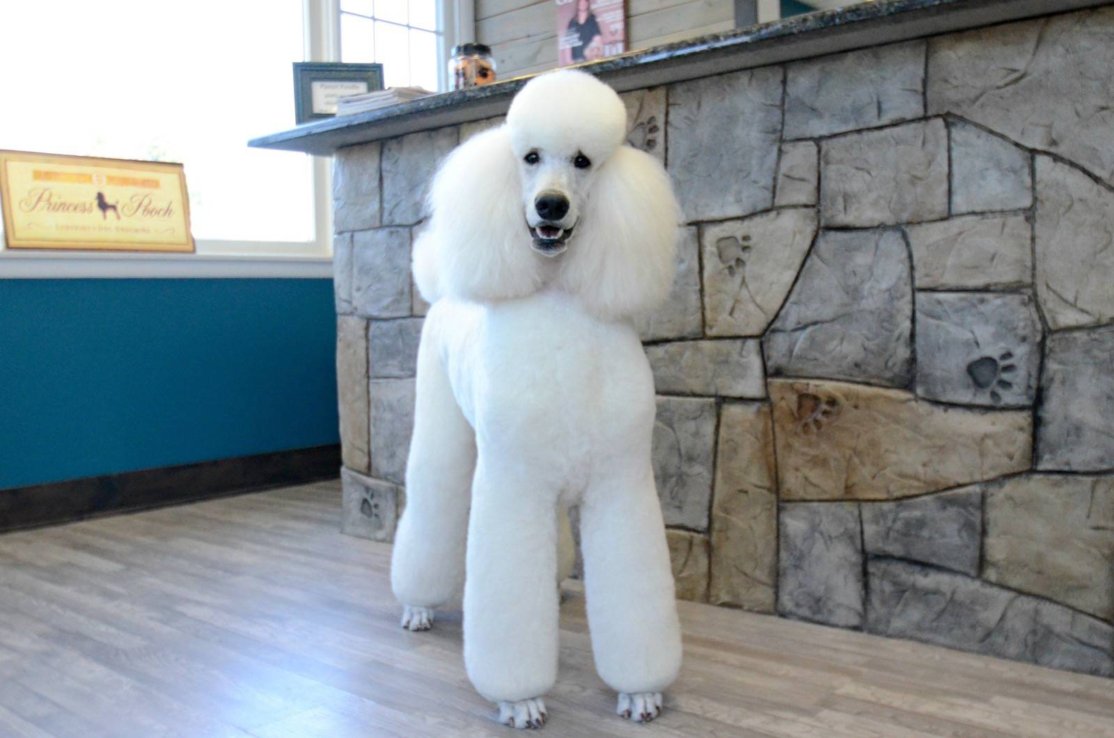 Dog Grooming Salon Red Bank Nj Planet Poodle