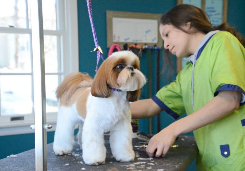 Planet Poodle Dog Grooming Service in RedLake NJ